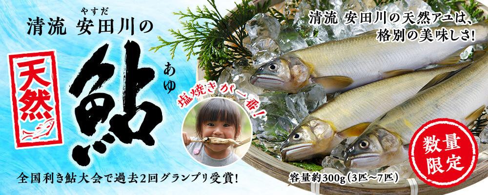 清流安田川の天然鮎【481】